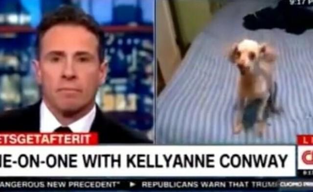 イヌがキャスターに必死の訴え.jpg