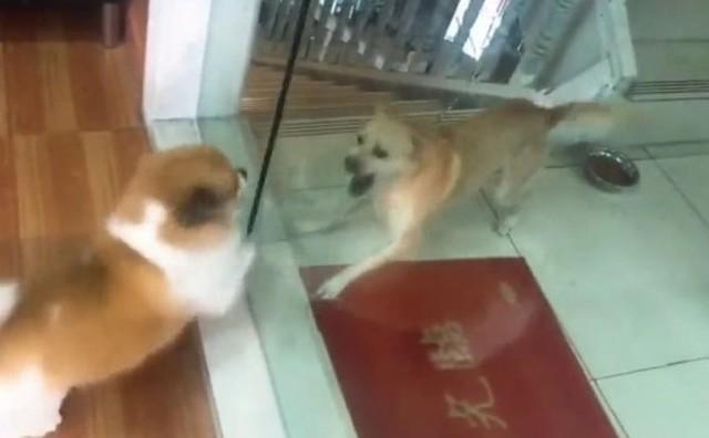ガラス越しのイヌのケンカ.jpg