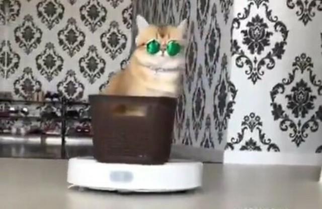 サグライフのネコ.jpg