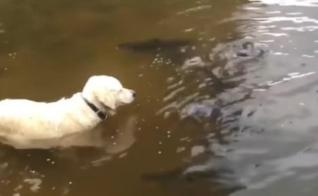 ナマズを捕まえるイヌ.jpg