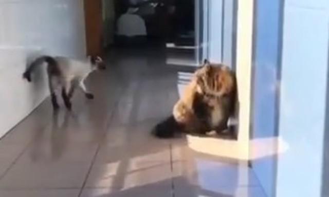 ネコの凄い攻撃.jpg