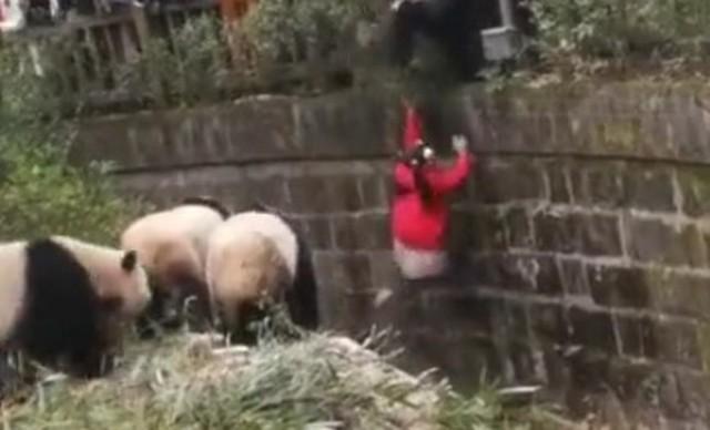 パンダの檻に人間が.jpg