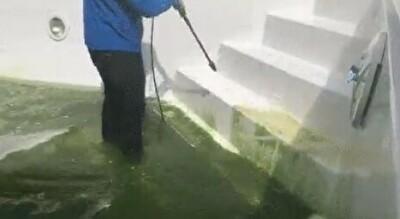 プールのコケ掃除.jpg