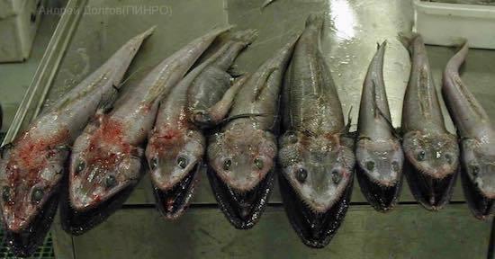 ロシアの海の怪物たち (23).jpg