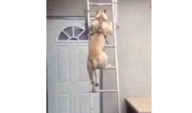 梯子を下りるイヌ.jpg