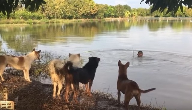 池で犬たちを驚かす飼い主のいたずら.jpg
