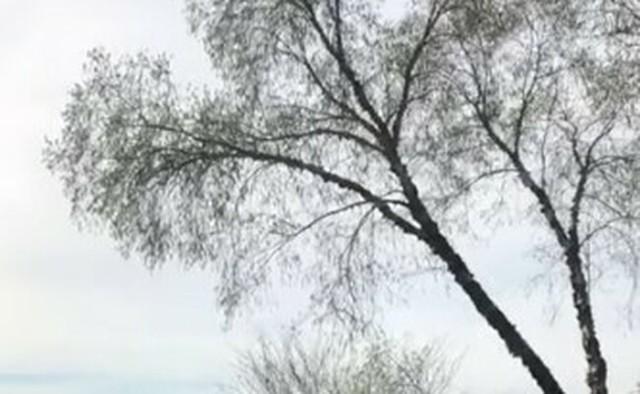 煙の木が倒れる.jpg