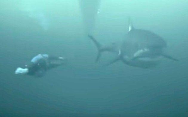 サメと人間の泳ぎ対決
