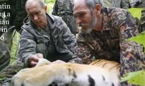 プーチンのトラ