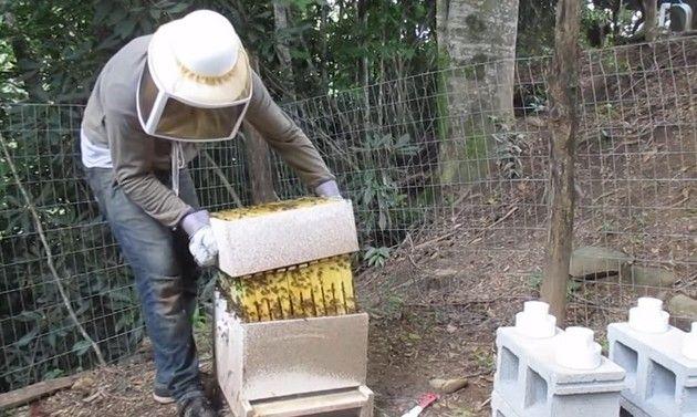 養蜂家の失敗