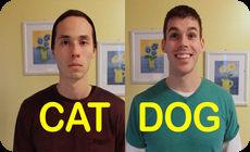 犬と猫の違い02