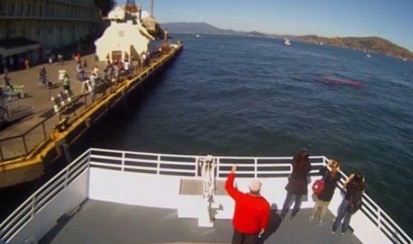 サメがアシカを襲うアルカトラズ