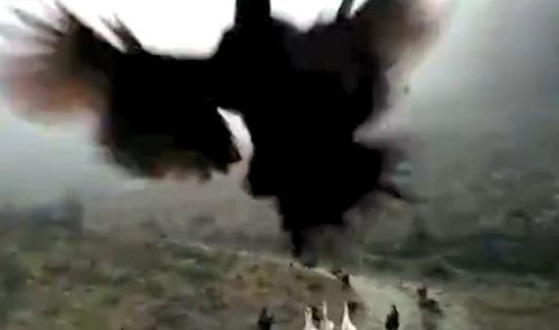 ニワトリが飛ぶ映像