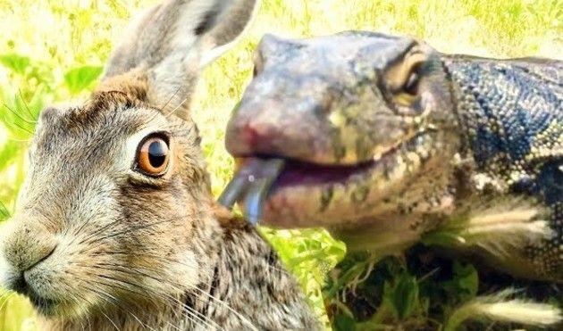 トカゲにヒヨコとウサギが喰われる瞬間
