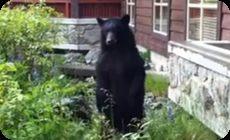 近距離で野生の熊に遭遇するも撃退。