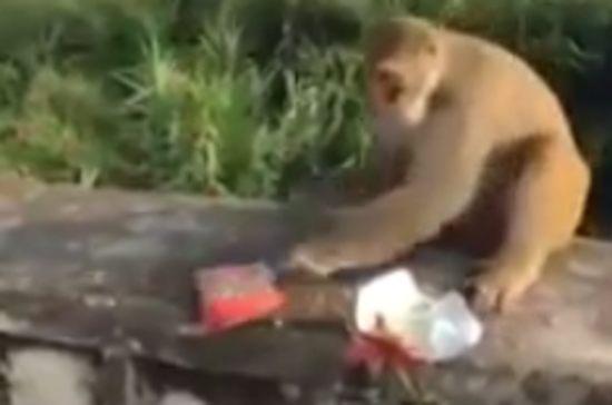 サルに爆弾お菓子を与えるイタズラ