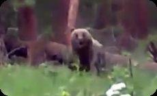 クマが襲ってくる