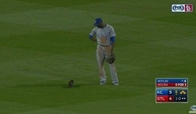野球場にネコが乱入
