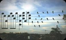 電線に留まった鳥を演奏
