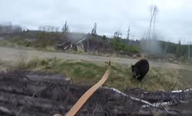 クマの攻撃は突然に。