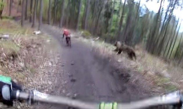 クマに襲われるマウンテンバイク