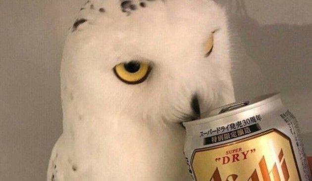 ビールを飲んだ時のフクロウ