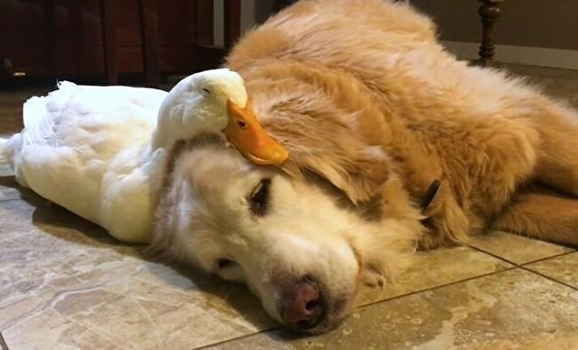 すべての動物が寝る時.jpg