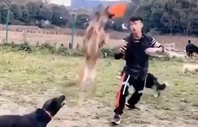 イヌと飼い主のアクロバティックなフリスビー.jpg