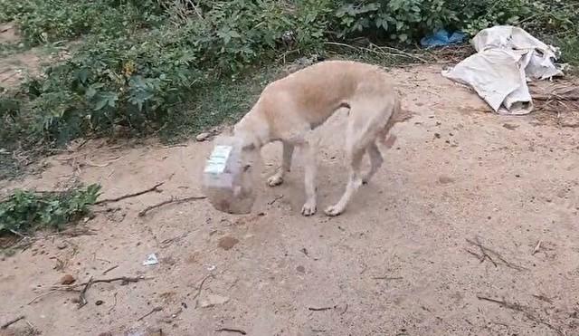 イヌの頭にはまったプラスチックボトルを取る.jpg
