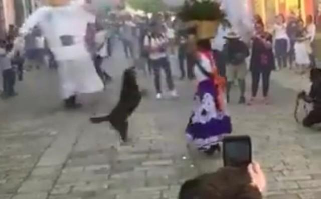 イヌもクルクル回る祭り.jpg