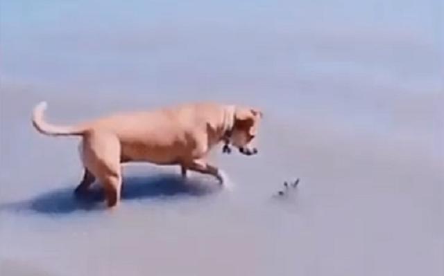 イヌを後ろから脅かす.png