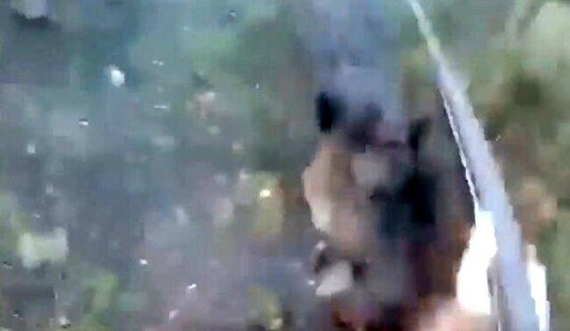 イノシシに襲われた女性ハンター.jpg