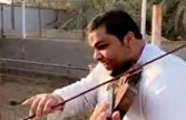 ウシにヴァイオリンの音色を聴かせてみた。.jpg
