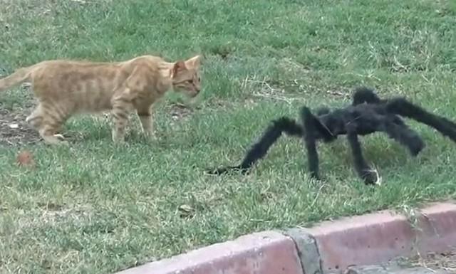 オモチャのクモに追いかけられるイタズラ.jpg