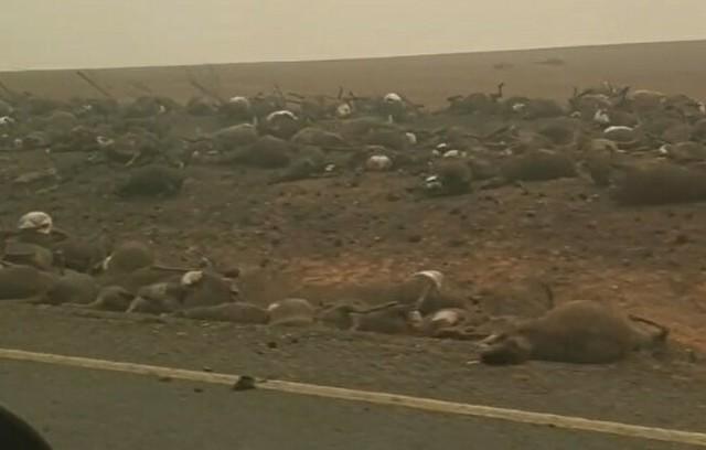 オーストラリアの山火事で死んだ動物たち.jpg