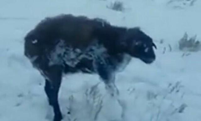 カザフスタンの氷漬けの動物たち.jpg