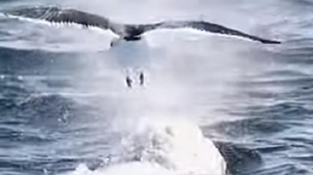 カモメが鯨の背に乗る.png