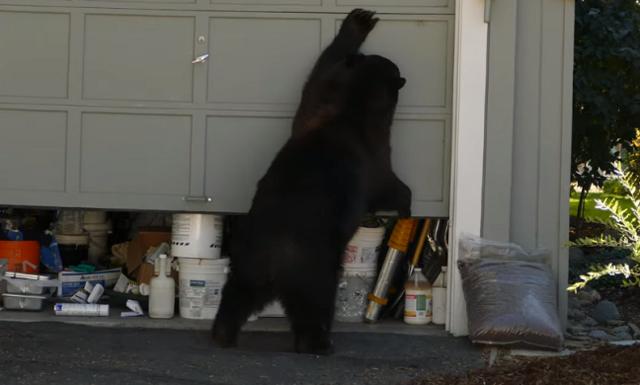 ガレージを開けるクマ.png