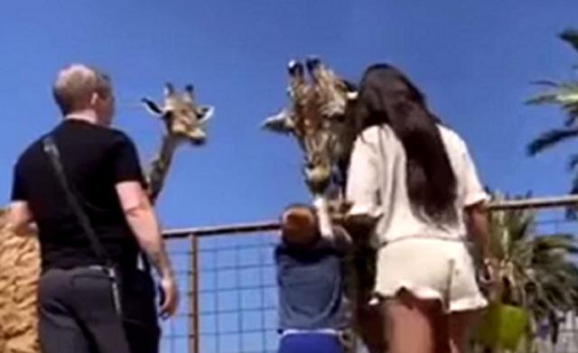 キリンが子供を持ち上げる.png