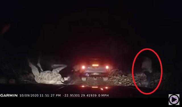 キリンは車に躓き倒れ.png