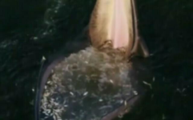 クジラの捕食が凄すぎ.jpg
