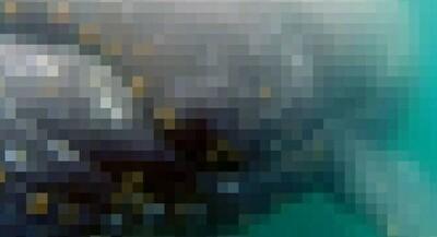 クジラを間近で見ると….jpg