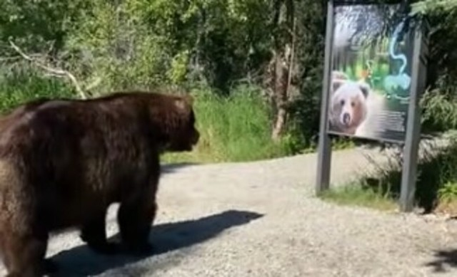 クマと接近遭遇してやり過ごす.jpg