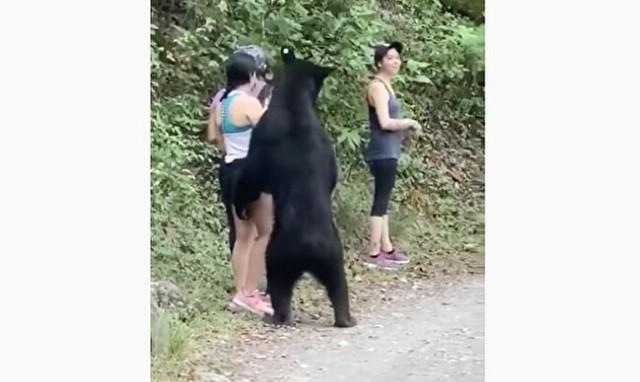 クマにセクハラされるメキシコ人.jpg
