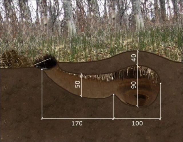 クマの冬眠用の巣穴 (1).jpg