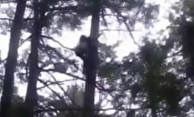 クマみたいに木に登るロシア人.jpg