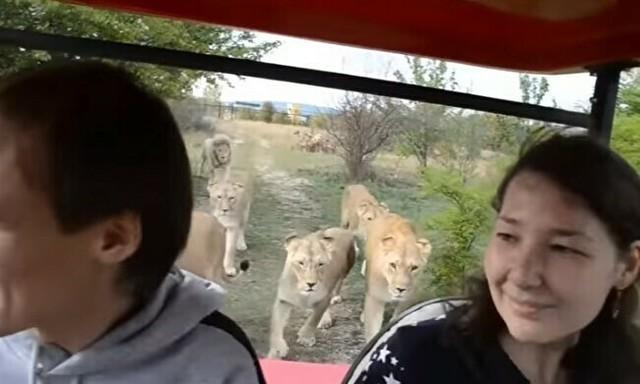 クリミアの動物園が大雑把すぎ.jpg