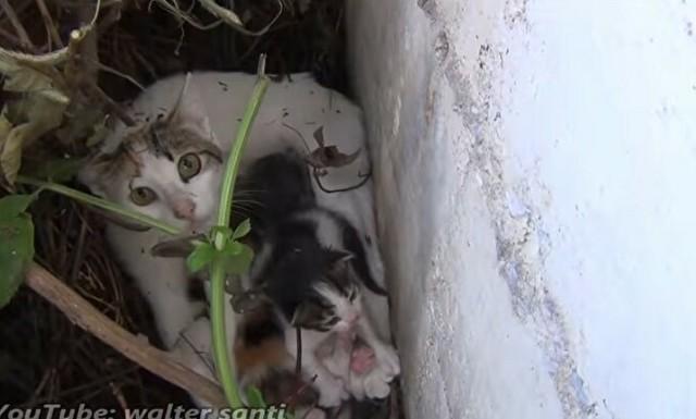 ケガをしたネコを子供ごと助けた時の映像.jpg