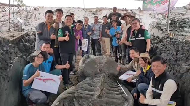 コクジラの化石が発見される.png