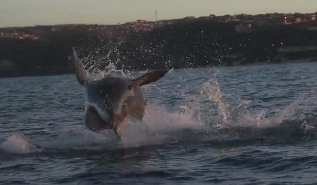 サメがアシカを狙う瞬間.jpg